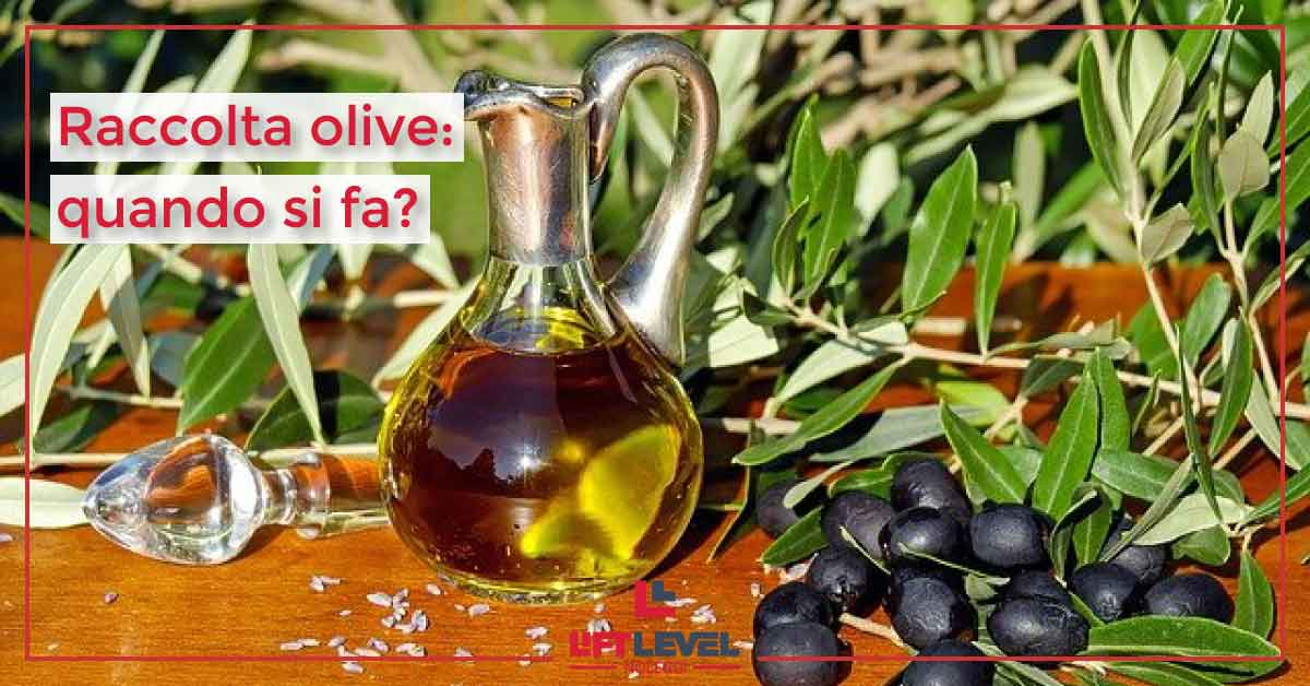 Raccolta olive: quando si fa?